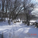 il giardino di casa con la neve