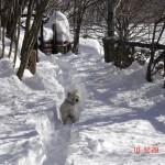 Otello nella neve