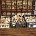 Funghi raccolti il 10 e 11 ottobre nei boschi di Zum Zeri e Albareto
