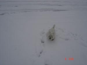 Otello sfida il gelo